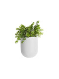 Oval Plant Pot White