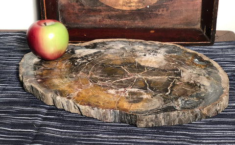 Fine Madagascar Petrified Wood Slab. Nice color variations, natural wood edge. Perfect for display, as a cheeseboard or trivet. From Madagascar, approximately 200 million years old!