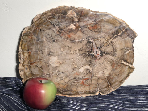 Fine Madagascar Petrified Wood Slab