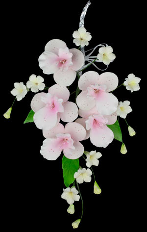 Cooktown Orchid Spray - Pink 3 pcs