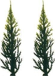 Evergreen (Variegated) Tree - 3 - 12 Count or 144 Count
