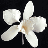 Cattleya Single - Large White 32 pieces