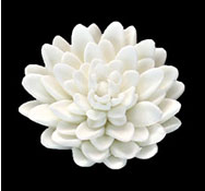Chrysanthemum - Large - White Only - 18ct