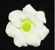 Cosmos Flower - White w/ Green Center - 36ct