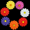 Gerbera - Medium - Multicolor - 36 ct