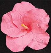 Hibiscus Flower - Large Pink - 9ct