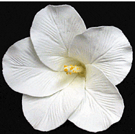 Hibiscus Flower - Large White - 9ct