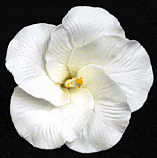 Hibiscus Flower - Medium White - 16ct