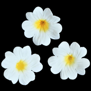 Primula Flower - White Primroses 110 ct