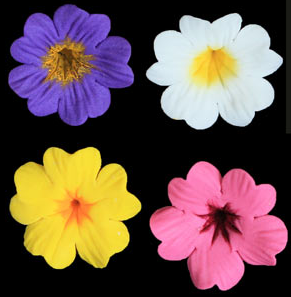 Primula Flower - assorted Color Primroses 110 ct