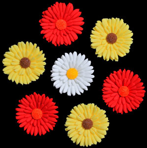 Shasta Daisies -  Red W/Orange Center - 18ct
