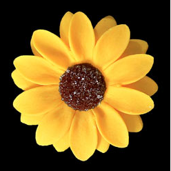Sunflower Single -  50ct