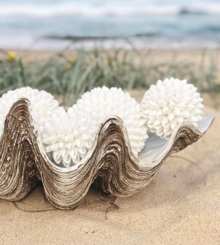 Vintage Clam Shell - Large 68cm