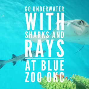 Shark and ray experience with ScubaBros at Blue Zoo - special! 40% off!