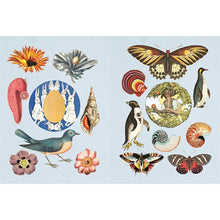 Load image into Gallery viewer, The Antiquarian Sticker Book: Over 1,000 Exquisite Victorian Stickers