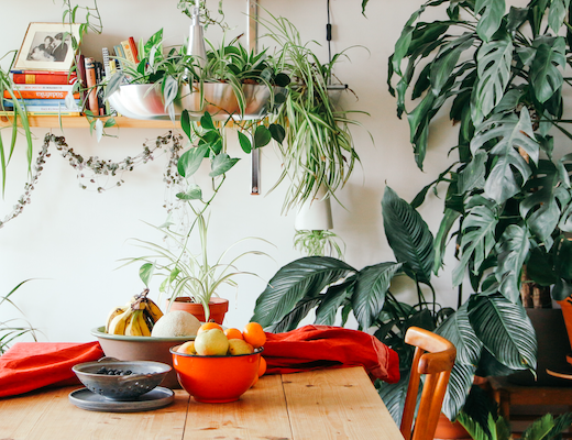 Five Lessons About Indoor Houseplant I wish I'd known earlier