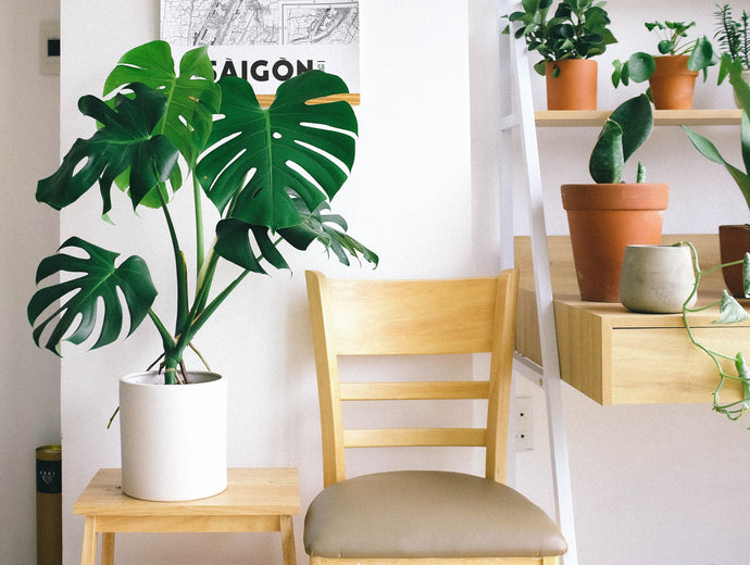 Choosing the right house plants for your home