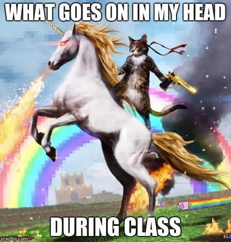 cat riding a unicorn funny meme