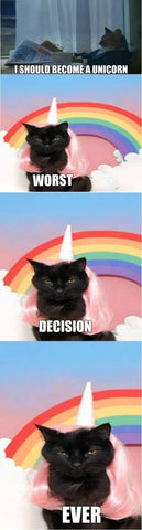 black cat unicorn meme