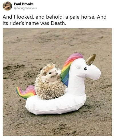 hedgehog unicorn meme