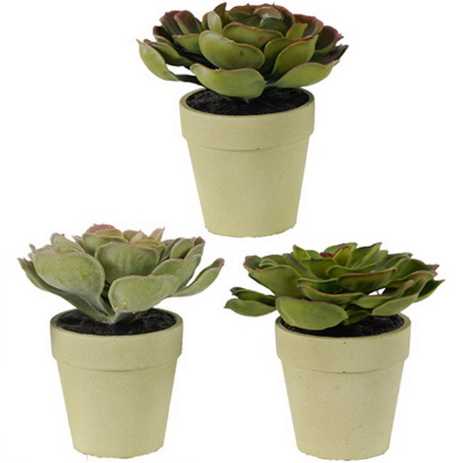 Durie Plants Set Of 3