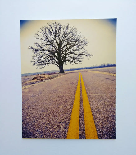 Art & Soul Photography Burr Oak Print 8X10 - Color