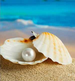 An Ingrained Bond: the Story of the Pearl and the Oyster