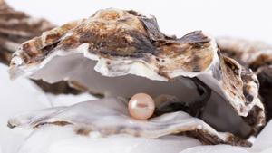 The Pearl Farming Ecosystem: How Pearl Farming Helps the Environment