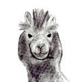 Load image into Gallery viewer, Illimani Eco-Llama