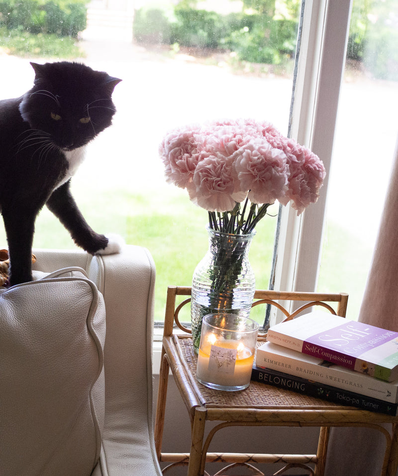 cat in front of a window with candle, books, flowers