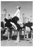 Wenda and Ostriches