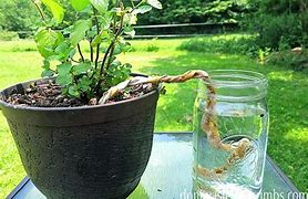 Ways to water your plants while you are away on vacation!