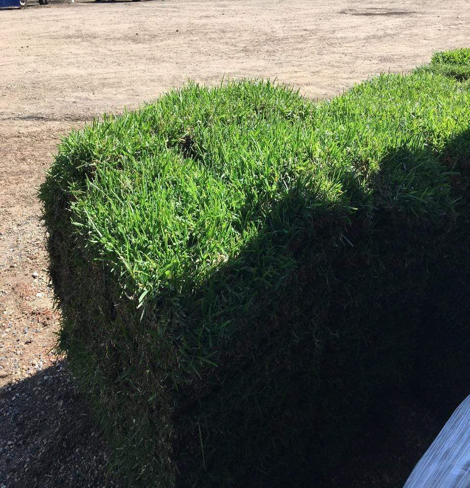 St Augustine 1/2 Pallet (Pick-up Only) - Champion Landscape Supplies - GRASS