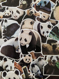 Panda Sticker Pack