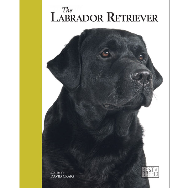 LABRADOR RETRIEVER - BEST OF BREED (4606638194741)