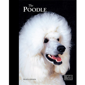 POODLE - BEST OF BREED