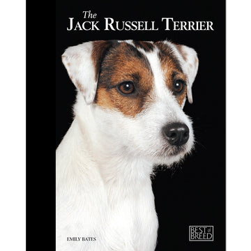 JACK RUSSELL - BEST OF BREED