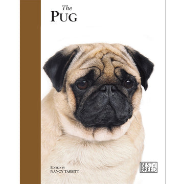 PUG - BEST OF BREED