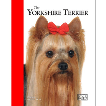 YORKSHIRE TERRIER - BEST OF BREED