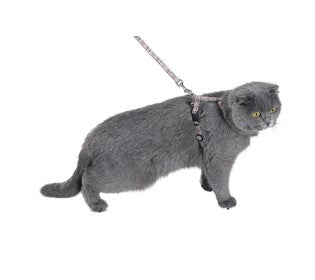 KILT CAT HARNESS & LEAD - BEIGE