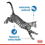 FELINE HEALTH NUTRITION INDOOR JELLY (WET FOOD - 12 POUCHES)