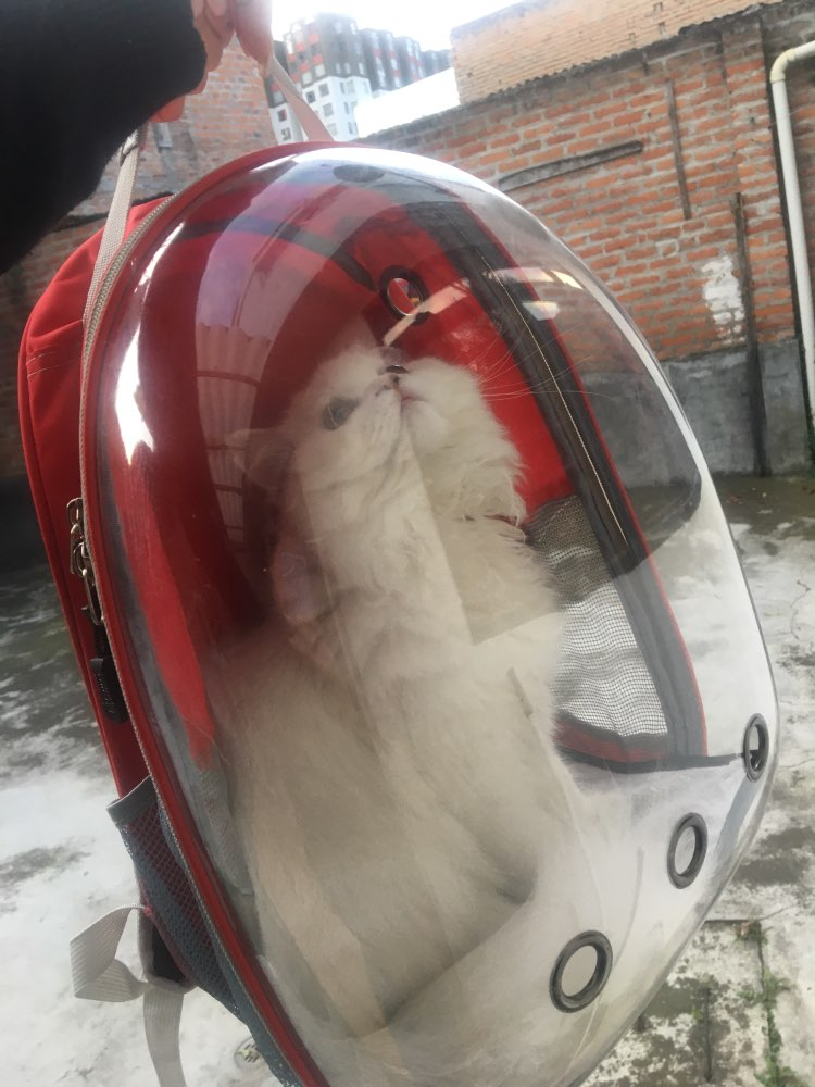 Astronautical Pet Carrier