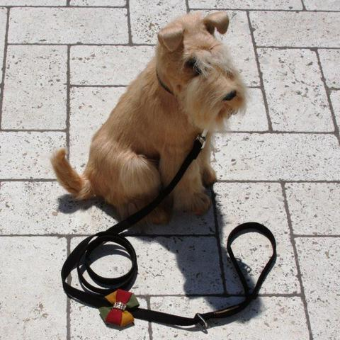 Susan Lanci Dog-products Autumn Bow Leash