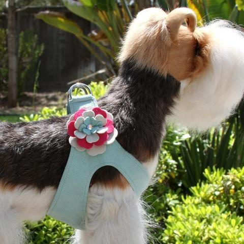 Susan Lanci Dog-products Blossom Flower Step In Harness