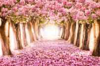 Katebackdrop:Kate Pink Flower Tree Path Spring Backdrop for Wedding Photography