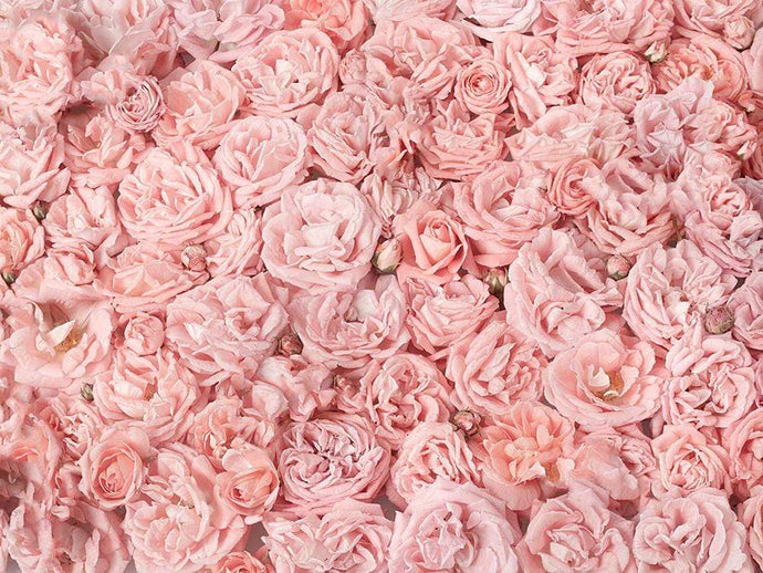 Katebackdrop:Kate Pink Rose Floral Backdrop Wedding Photography Backgrounds Photo Photography Studio Props