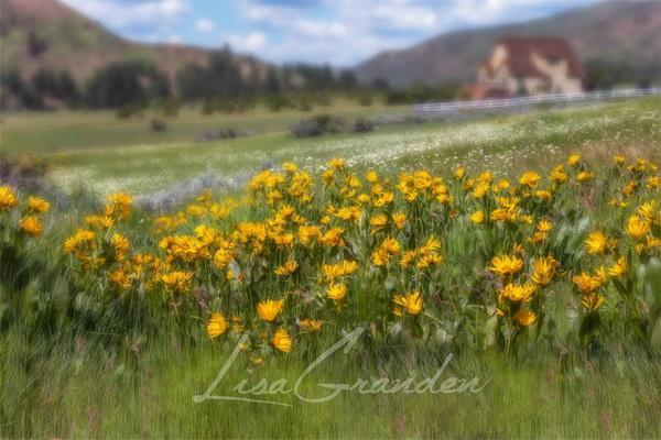 Katebackdrop:Kate Mountain Meadow Backdrop for Photography Designed by Lisa Granden