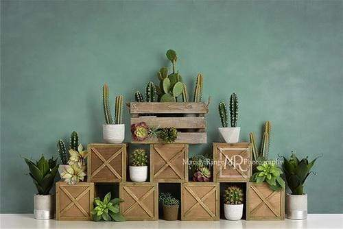 Katebackdrop:Kate Spring Cactus and Succulents with Crates Backdrop for Children Designed By Mandy Ringe Photography