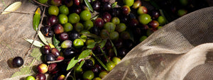 How We Produce the Olive Oil