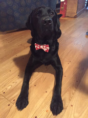 Pet Bowties & Ties